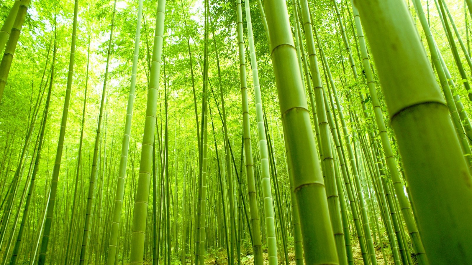 Bamboo is an amazing plant and material!